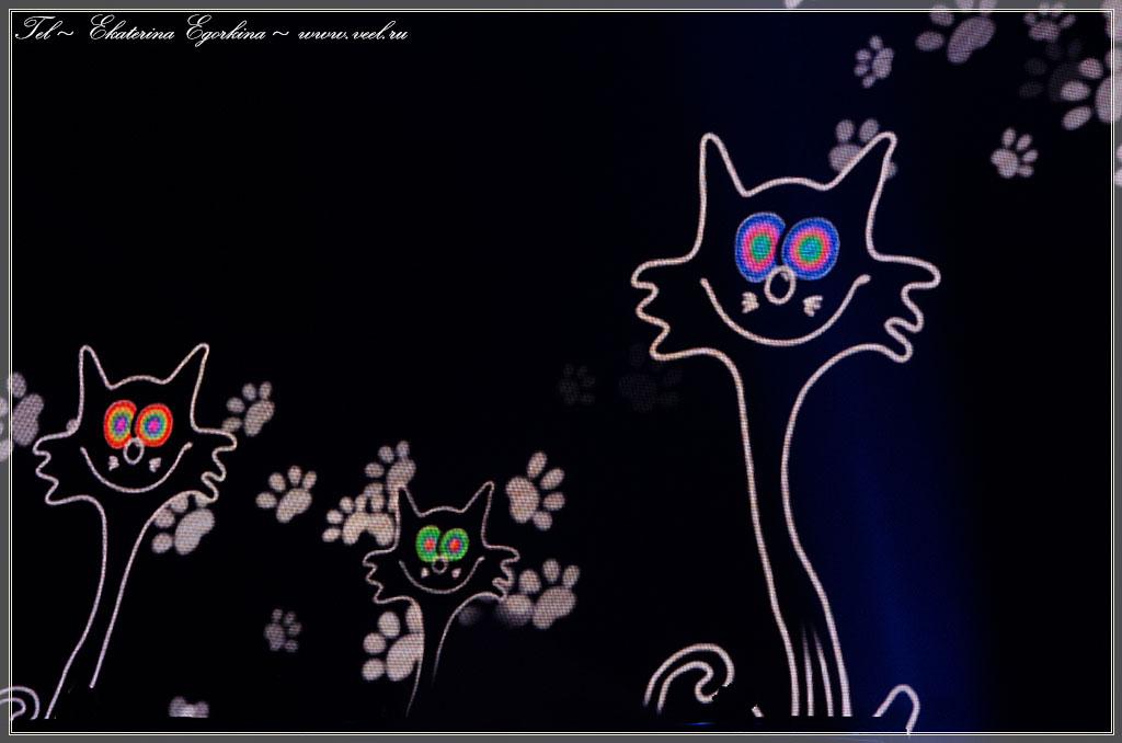 Песня про кота