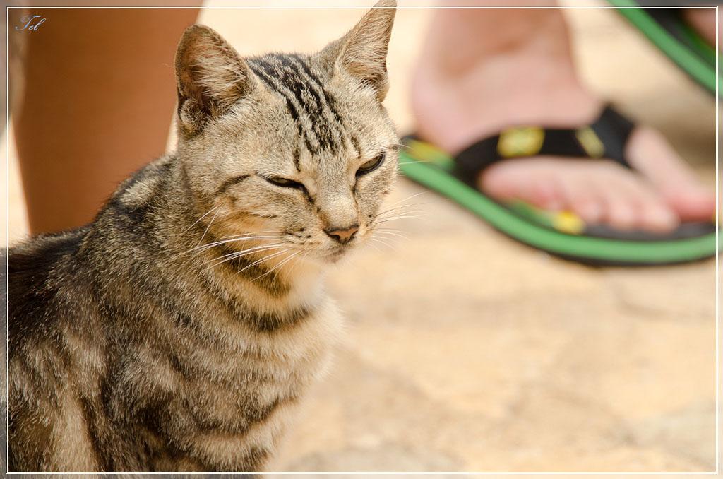 Регги-кот