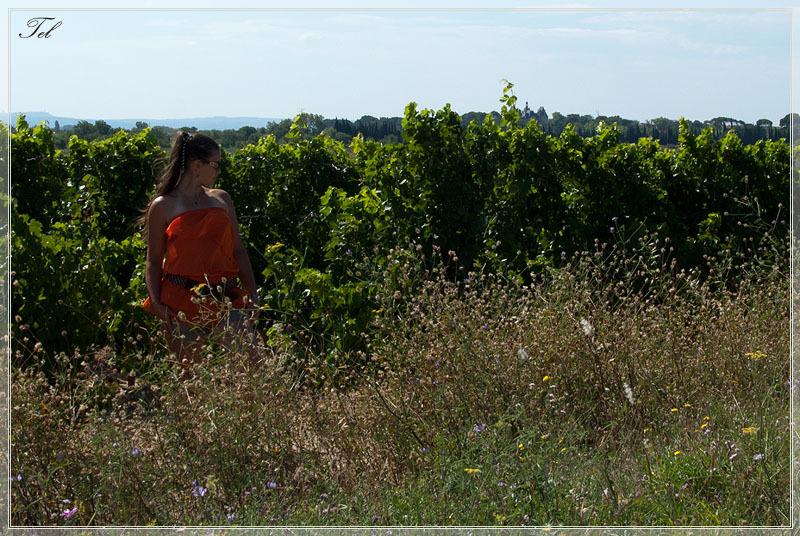 В виноградниках 1