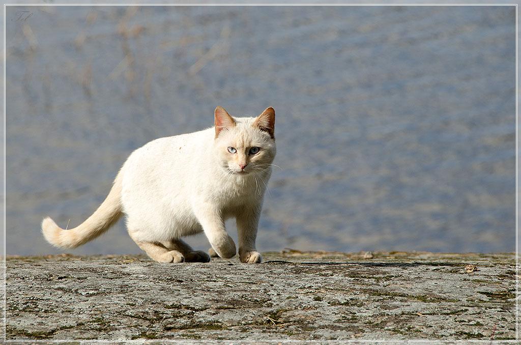 Местный кот