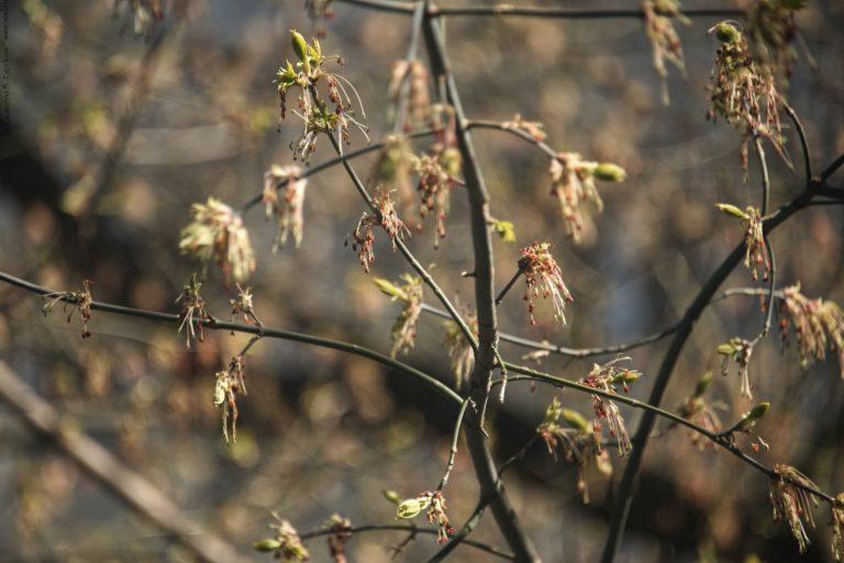 Весна. Когда природа просыпается