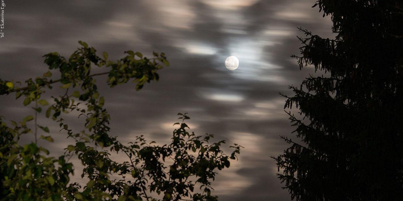 Фото: Лунная соната