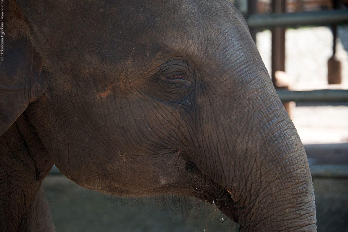Фото: По улице слоны ходили.