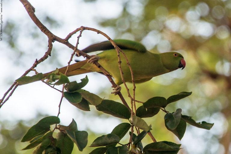 Фото: Как попугаи варана гоняли
