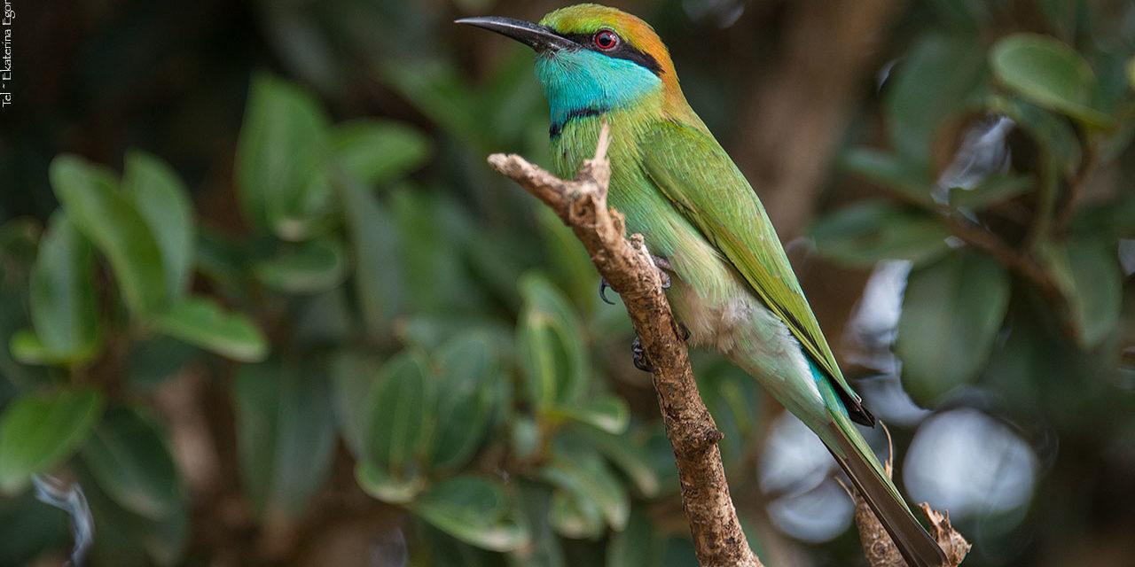 Животный мир Шри-Ланка.