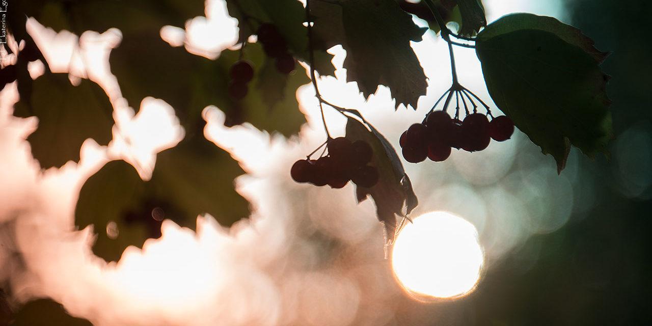 Фото: Краски осеннего сада