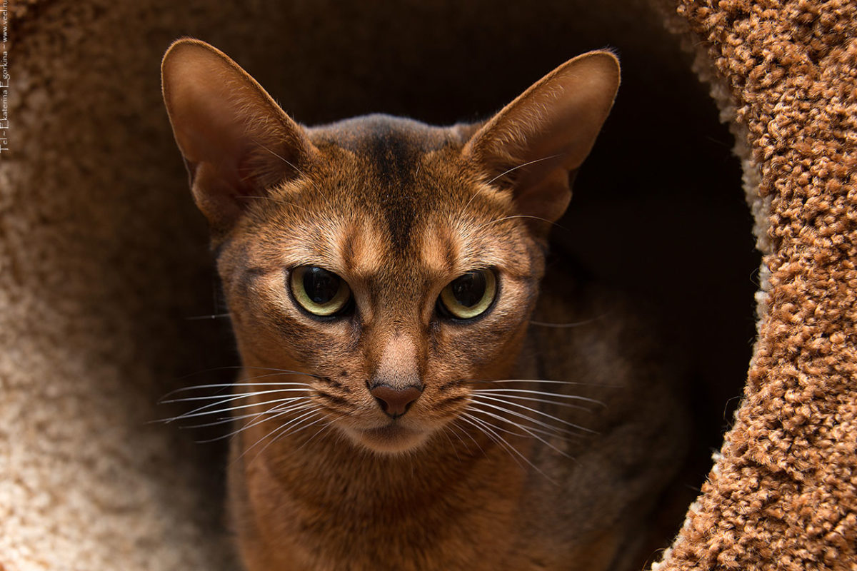 Фото: Кот в берлоге.