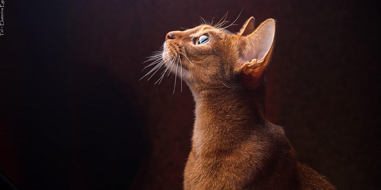 Фото: Котики
