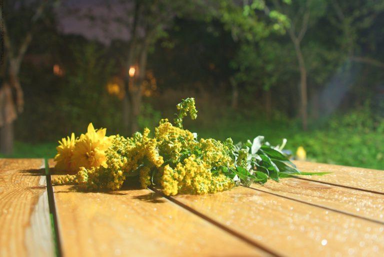 Осенний вечер и падающая звезда